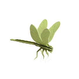 Lovi Trollslända, Ljusgrön