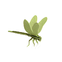 Lovi Libelle, Hellgrün