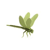 Lovi Libellule, vert clair