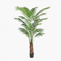 Konstväxt Areca Palm