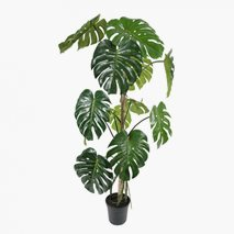 Konstväxt Monstera