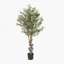Konstväxt Olivträd