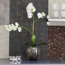 Konstväxt Orkidé Phalaenopsis Vit inkl. kruka