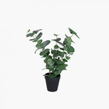Konstväxt Eucalyptus Small inkl. kruka