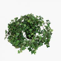 Kunstig plante Eføy