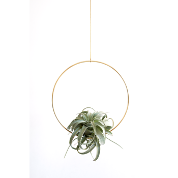 Brass hanger, Ring M