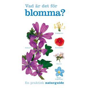 Vad är det för blomma?