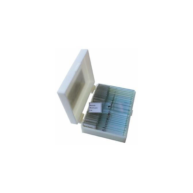 Djurriket - mikroskoppreparat