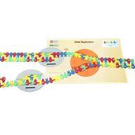 Flow of Genetic Information Kit