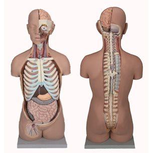 Torso - öppen rygg