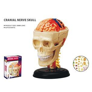 Anatomiskt pussel- Hjärnan