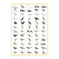 Fåglar - plansch