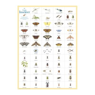 Insekter - plansch