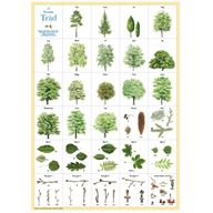 Träd - plansch