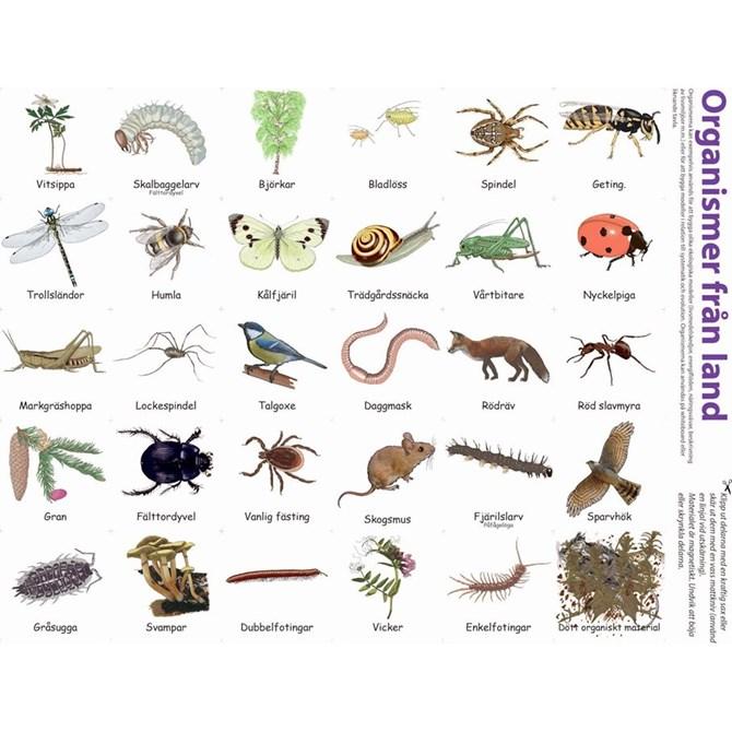 Ekosystem (På land) - Magnetiska bilder