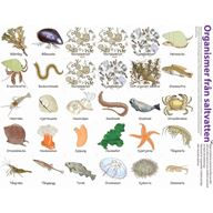 Ekosystem (saltvatten) - Magnetiska bilder