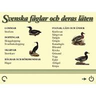Svenska fåglar och deras läten
