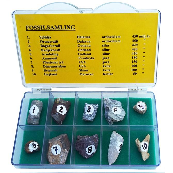 Fossilsamling - 10 st