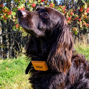 WeHunt GPS Plus Dog Tracker