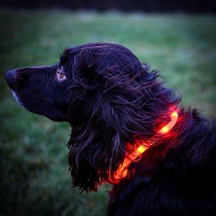 Hund Halsband blink just.bar visio light USB