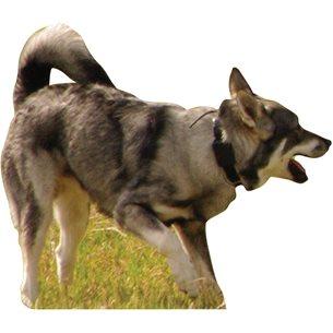 Targets Hund skjutmål löpande  kanalplast