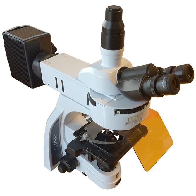 fluorescensmikroskop iScope från Euromex, 40, 100, 400 och 1000x