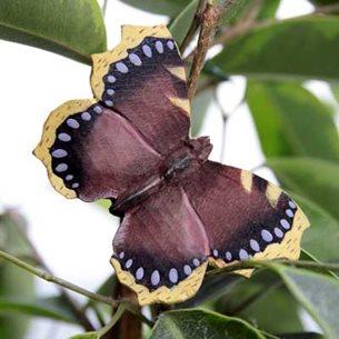 Fjäril - Sorgmantel