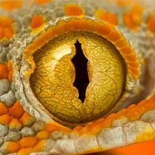 Hur mycket UV-B behöver min reptil?