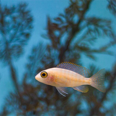 starta upp nytt akvarium akvariefisk
