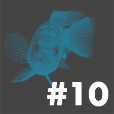 10 akvarietips för nybörjare