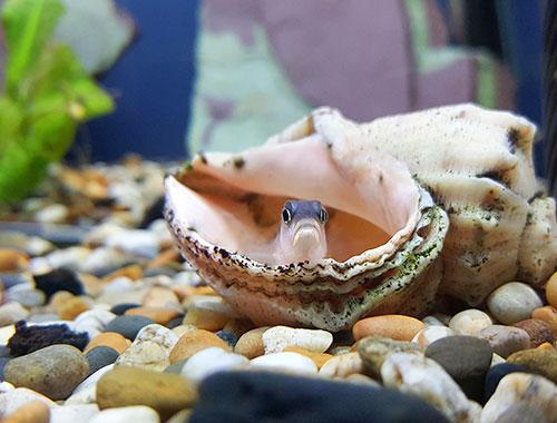 städa och rengöra akvarium