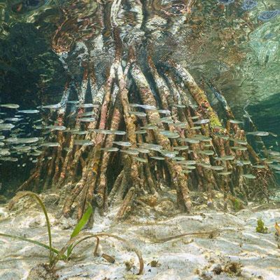 inredning som grumlar akvarium