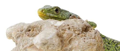 UVB för reptiler