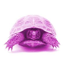 Från UV till IR - Del 4: Värme och infraröd strålning för reptiler