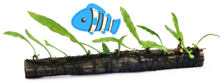 akvariefisk växt stock