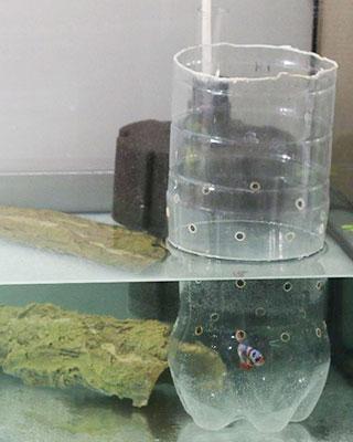 kampfisk skorsten