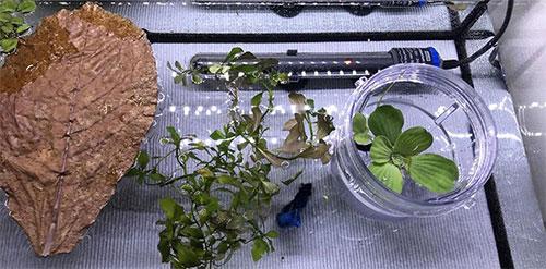odla kampfisk inredning