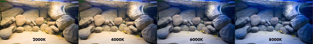 kelvin akvarium