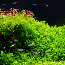 Akvarieväxter och belysning