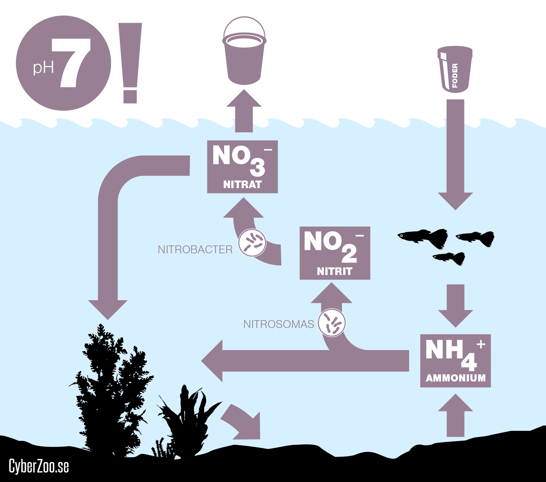 nitrifikationsprocessen
