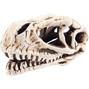 Dinosaurieskalle - 14x7x7 cm