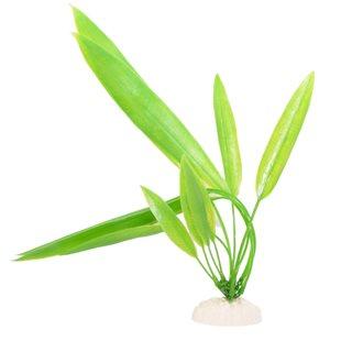 Akvarieväxt 30 cm - Svärdplanta