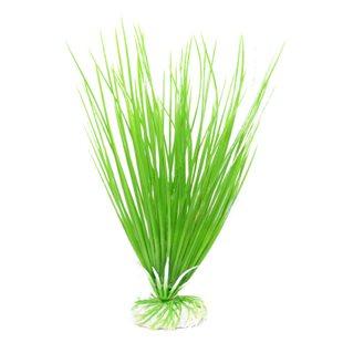Akvarieväxt 20 cm - Ciklidgräs
