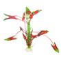 Akvarieväxt 30 cm röd/grön