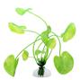 Akvarieväxt 20 cm - Hydrocotyle leucocephala