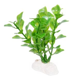 Akvarieväxt 10 cm - Bacopa