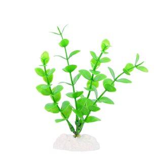 Akvarieväxt 10 cm
