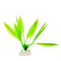 Akvarieväxt 10 cm - Svärdplanta