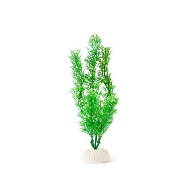 Plastväxt - Hornblad - Ceratophyllum - 20 cm