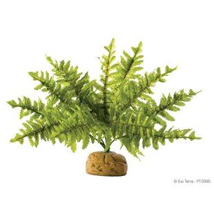 Exo Terra Ormbunke - Liten - Regnskogsväxt
